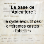 Le cycle de l abeille